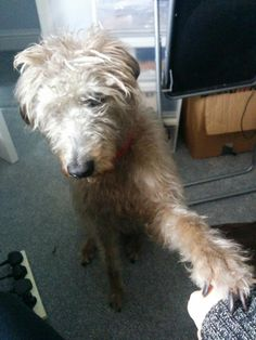 Barney showing his for Blue Cross, Pets, Twitter, Animals And Pets