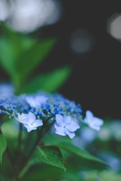 Photos 2016, Natural World, Blue Green, Flora, Wildlife, Tumblr, Explore, My Favorite Things, Plants
