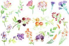 Hand painted watercolor hedgerow berries and wild by CornerCroft