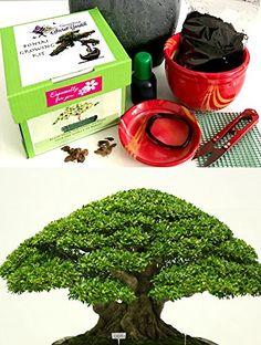 Awe Inspiring 57 Best Bonzai Training Wire Images Bonsai Tools Gardening Tools Wiring Database Gramgelartorg