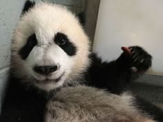 Zoo Atlanta @ZooATL