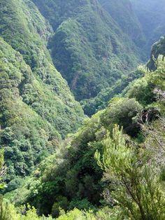Laurissilva (in Madeira island)
