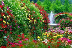 Flower Garden as Background >>> Visit the image link more details.