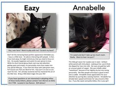 Paws In Need's Spay/Neuter program spayed the mom cat and now her kittens are available for adoption in the Tri-Valley area (Danville to Livermore, CA).  (See the photo for details.)