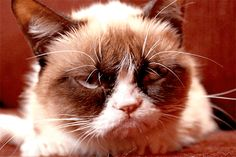Grumpy cat is a she and she has dwarfism. Her real name is tardar sauce or tard for short. shes also pretty