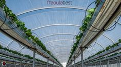 Location: Cyprus and Greece as a representative part of the Mediterranean basin were the chosen location for the FraoulaBest soluti.