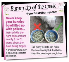 Bunny tip of the week - Don't over feed the pellets www.best4bunny.com