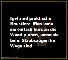 . Funny Cute, Hilarious, German Quotes, Good Jokes, Lyric Quotes, Just For Laughs, Laugh Out Loud, True Stories, Cool Words
