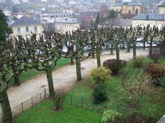 pollarded trees, France