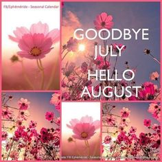 Welcome August Quotes, Happy New Month Quotes, New Month Wishes, Welcome July, Hello August Images, July Images, Hello November, August Month, December
