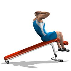 DECLINE CRUNCH INVOLVED MUSCLES DURING THE TRAINING ABDOMINALS