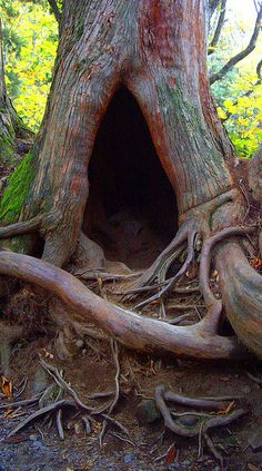 Entrance to the Realm Of Faerie...