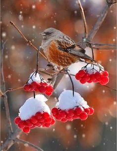 Ideas For Garden Winter Snow Beautiful Birds Beautiful Gif, Beautiful Birds, Pretty Birds, Love Birds, Gif Bonito, Beau Gif, Illustration Noel, Winter Scenery, Tier Fotos