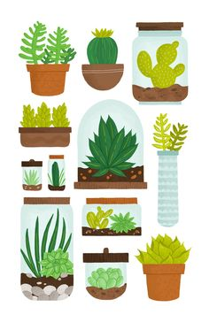 greaterthanorequalto:  New personal piece: a collection of succulents and terrariums
