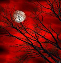 Red, black moon  Red sky at night, sailor's delight  red sky, moon, tree, branches