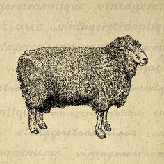 Lincoln Ram Sheep Animal Graphic Image Printable Digital Download Antique Clip Art Jpg Png Eps 18x18 HQ 300dpi No.3553 @ vintageretroantique.etsy.com #DigitalArt #Printable #Art #VintageRetroAntique #Digital #Clipart #Download