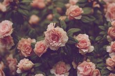 In The Storm Of Roses | Flickr - Photo Sharing! on We Heart It