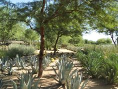 sunnylands gardens - Google Search