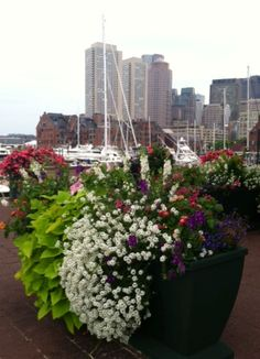 So many beautiful annuals along Boston's Harborwalk.