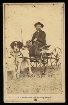 Unusual CDV Photo / Man in Cart Being Pulled by Large Dog.