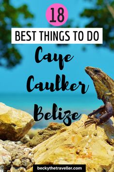 18 Best Things to do in Caye Caulker Belize - A travel guide to Caye Caulker in Belize, Central America. Top things to see and do on your trip the Caye Caulker Island. Belize Hotels, Belize Vacations, Belize City, Belize Travel, Mexico Travel, Vacation Resorts, Italy Vacation, Beach Travel, El Salvador