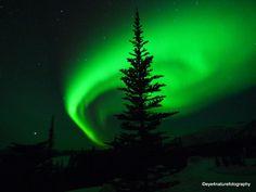 Northern Lights over Wolverine Lake, Yukon