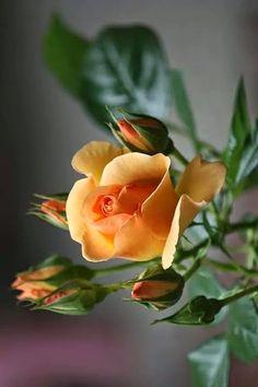 G+♥ roses♥ http://click-to-read-mo.re/p/9V22/53b81556