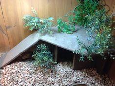reptile hide