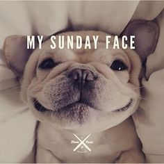 Double tap if that's your Sunday face too!  #love #TagsForLikes #photooftheday #me #instamood #cute #igers #picoftheday #girl #guy #beautiful #fashion #instagramers #follow #smile #pretty #followme #friends #swag #photo #life #funny #cool #hot #laze #lazy #iphonesia #sunday #dogs #weekend