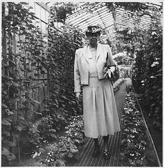 """""""I had a rose named after me and I was very flattered. But I was not pleased to read the description in the catalog: 'No good in a bed, but fine against a wall.'"""" - Eleanor Roosevelt"""