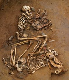 Cliffs End Farm - the pit burial. In one Late Bronze Age pit archaeologists found the skeletons of five people. The upper skeleton is an old man, with a child beside him. The lower one is a teenager with his head on the skull of a cow. (Click to find out more about the excavation site.)