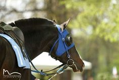 Race Horses, Horse Racing, Thoroughbred, Training, Animals, Animales, Animaux, Work Outs, Animal