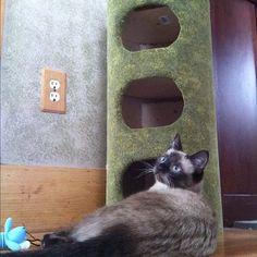 Nanako and the new kitty condo!
