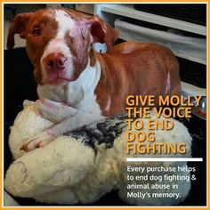 This is an extremely hard image to look at but we need to bring awareness to the sad reality and consequences of dog fighting …. Molly, an abused pit bull found in Baltimore City, who lost her struggle and gained her wings February 1, 2013. Molly is a victim of dog fighting. She was found near death after being used as a bait dog. RIP MOLLY <3    http://links.causes.com/s/clJkx2?r=QyUu