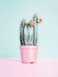 Naturaleza en verde menta y rosa