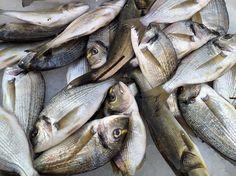 Πιο νόστιμα ψάρια: ποιο ψάρι από ποια θάλασσα; Φωτό: Labros Tsitsimelis Fish, Meat, Ichthys