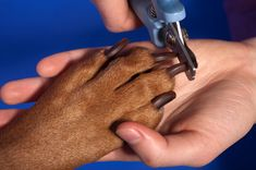 How to trim your dachshunds nails: The easy guide