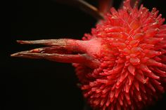 red | #Photography #Macro