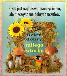 Humor, Polish, Random Stuff, Pictures, Cheer, Ha Ha, Funny Humor, Lifting Humor, Humour