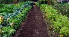 Try these 3 basic tips to bring permaculture into your life! Permaculture doesn't have to be difficult. Permaculture, Garden Soil, Growing Hibiscus, Plants, Plant Guide, Vertical Vegetable Garden, Organic Gardening, Vegetable Garden, Garden Companion Planting