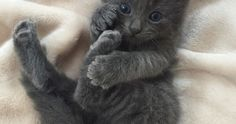 From @veggiedayz: Something is afoot. #cutepetclub by cutepetclub http://caresforcats.com http://ift.tt/1KL9QOQ  cats cat catlover catsofinstagram cat instacat catstagram catsagram lovecats instagramcats cat product reviews