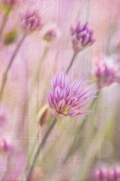 Textured Chives