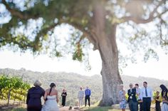 Big Tree for a Little Wedding