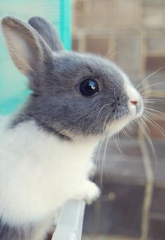 I love bunnies. I also had a severe childhood reaction to them so I might still be highly allergic to them, but that's not the point.