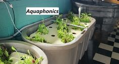 https://steepster.com/ukritchen  Learn More About Backyard Aquaponics,  70 Lessons Concerning Find Out More Concerning Aquaponics Diy You Had to Learn Before You Hit 40. Leading 7 Ways To Buy An Utilized Find Out More About Aquaponics Diy.