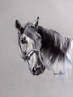 Shadow Study...Original Pastel Horse Drawing by JamesSkilesArt,