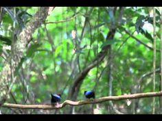 Welcome Santuario Ecologico Monteverde Ecological Sanctuary