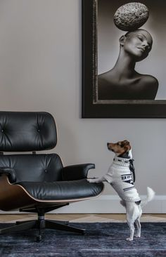 #interior #session #dog #design #photography #studio #absynt #studioabsynt