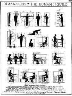 dimensionsofhumanfigure for furniture dimensions