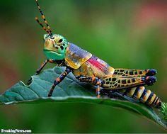 Funny Crickets Pictures - Freaking News